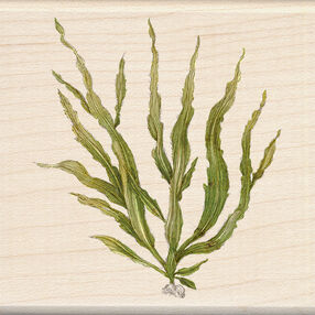 Seaweed Wood Stamp_60-00979