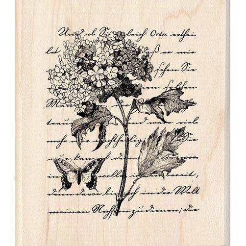 Botanical Script_91599