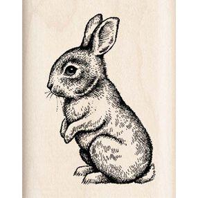 Baby Bunny_96656