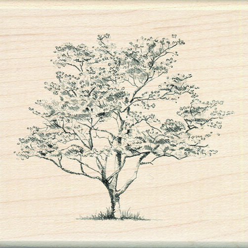 Small Dogwood_60-00212
