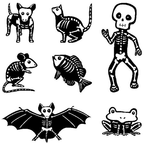 Little Skeletons Inchies Bundle_60-31152