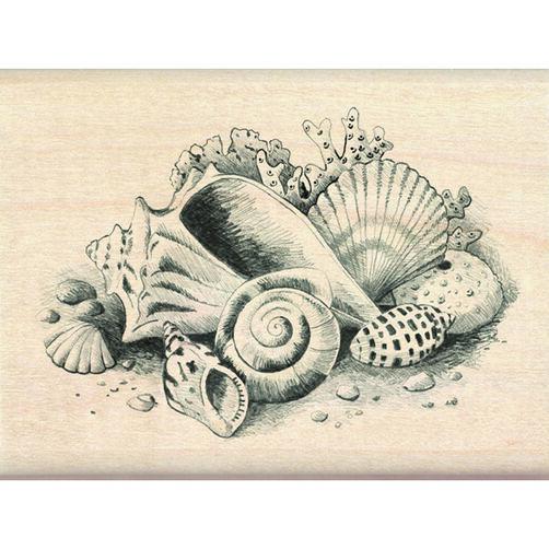 Seashells_60-00208