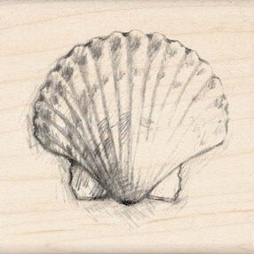 Scallop Shell_97114