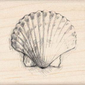 Scallop Shell_97114