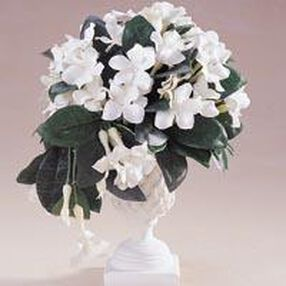 White/Green Stephanotis Cascade Topiary Arrangement