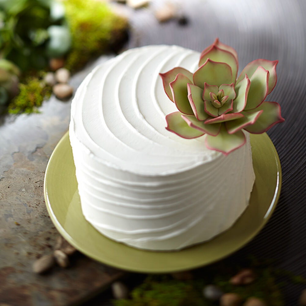 Succulent Topped Cake Jpg Sw 1000 Sh 1000 Sm Fit