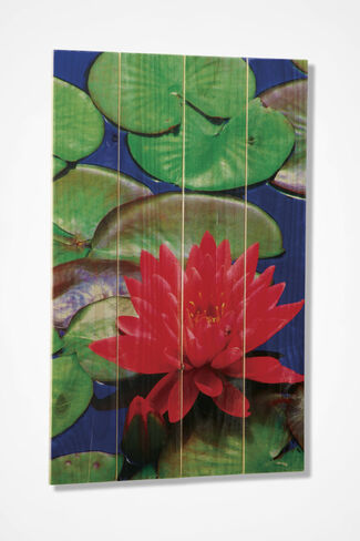 Lotus Flower on Cedar, Multi, large