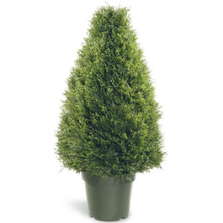 Upright Juniper Tree with Round Plastic Pot