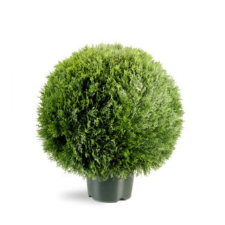20-Inch Cedar Pine Topiary with 9-Inch Round Plastic Pot
