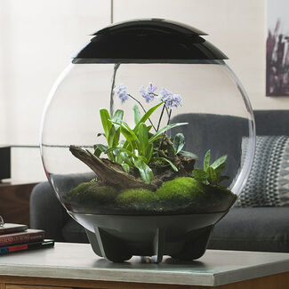biOrb AIR Plant LED Lit Terrarium with Automatic Misting