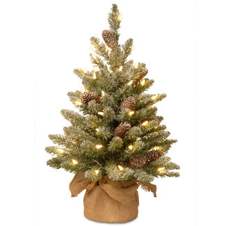 Snowy Concolor Fir Small Tree in Burlap with LED Lights & Timer