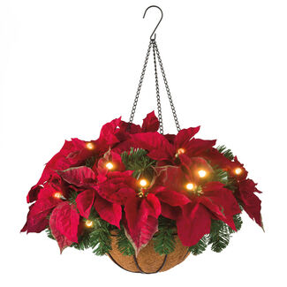 Cordless LED Poinsettia Hanging Basket