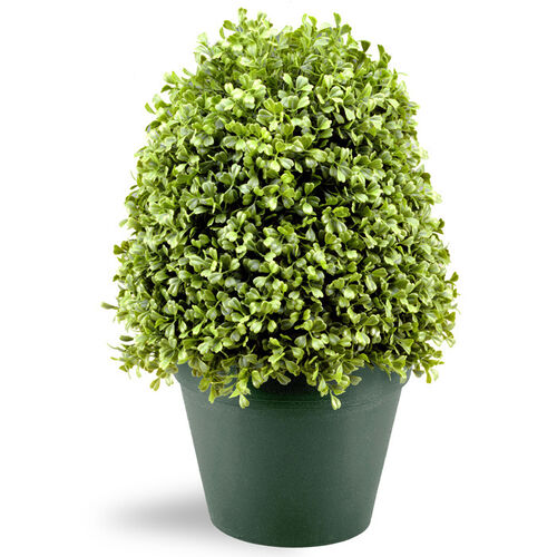 Boxwood Tree with Round Plastic Pot