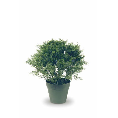 20-Inch Globe Juniper Tree with 8-Inch Round Plastic Pot
