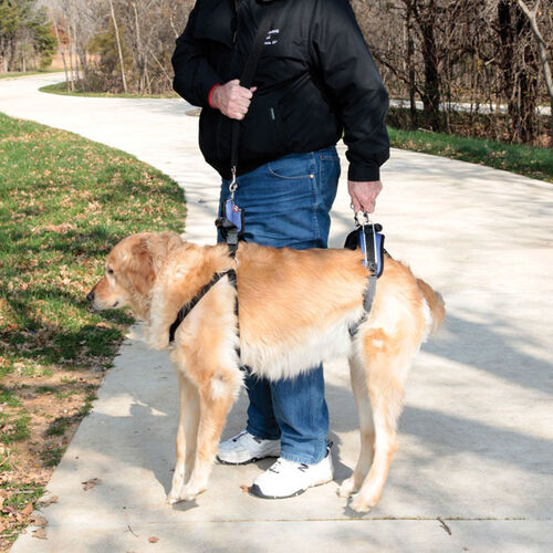 CareLift Large Full-body Lifting Dog Harness