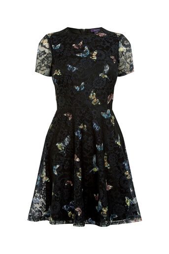 Oasis, FOREST BUTTERFLY LACE DRESS Black 0