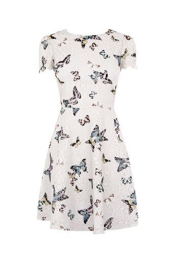 Oasis, BUTTERFLY LACE DRESS Multi Grey 0