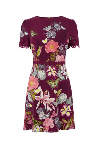 Oasis, BOTANY LACE DRESS Berry 0