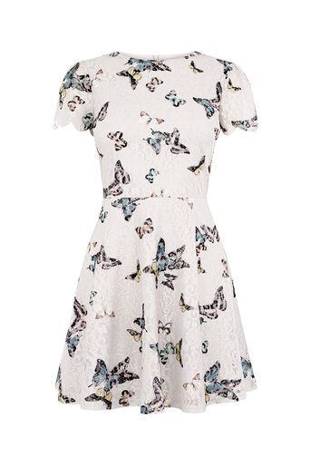 Oasis, SHORT EVERLY BUTTERFLY DRESS Mid Grey 0