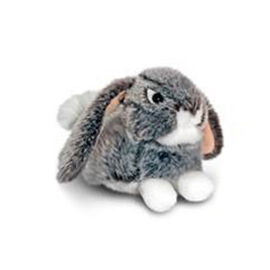 Grey Colour Laying Rabbit