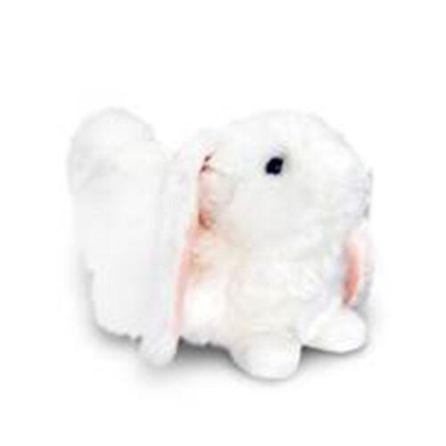 White Colour Laying Rabbit