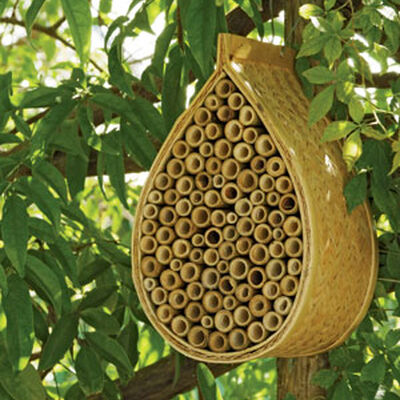 About Mason Bees Beneficial Bees Gardener S Supply
