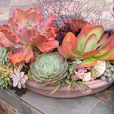 Growing Succulents In Containers Gardener S Supply