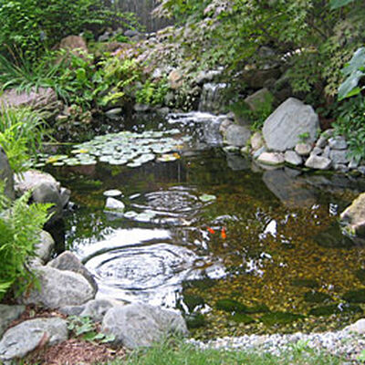 How To Keep Water Clear In Bird Baths And Ponds Gardener