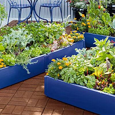 Vegetable Gardening for Beginners Gardeners Supply