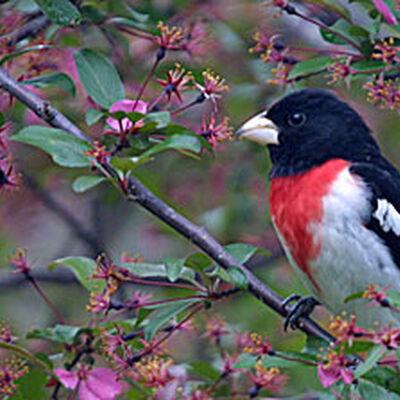 How To Attract Bug Eating Birds Backyard Birds