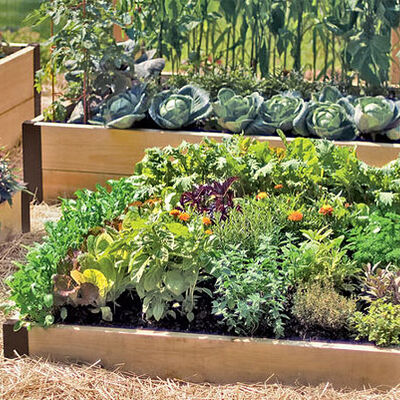 A Guide To Raised Beds Gardening In Raised Beds Square