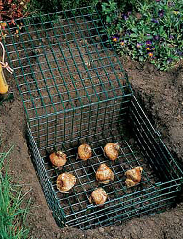 Bulb Cages, Set of 2