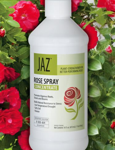 Jaz™ Rose Spray