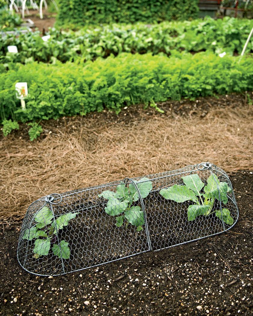 Chicken Wire Cloche Plant Protector 3 In 1 Gardeners Com