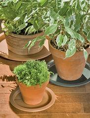 Plant Butler