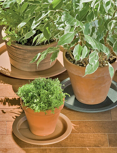 Plant butler indoor plant saucer tray buy from gardener 39 s supply - Indoor plant pots with saucers ...