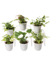 Fern Terrarium Plant Collection, Set of 6