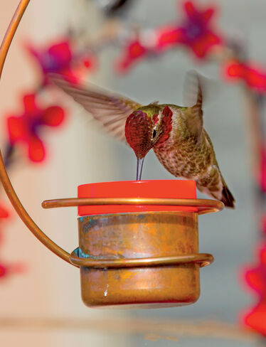 Copper Hummingbird Feeder