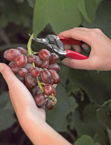 Curved Fruit Pruners