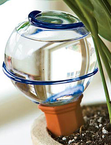 Watering Bulb