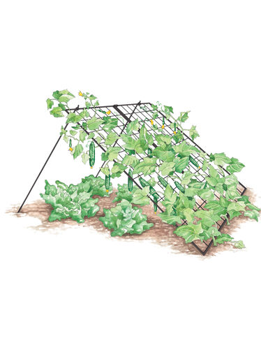 Large Cucumber Trellis