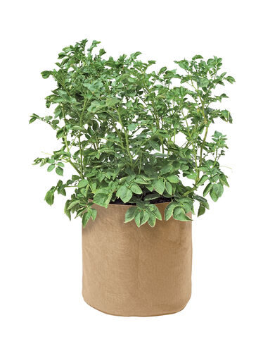 Colorful Potato Grow Bag