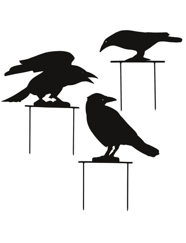Black Crows, Set of 3