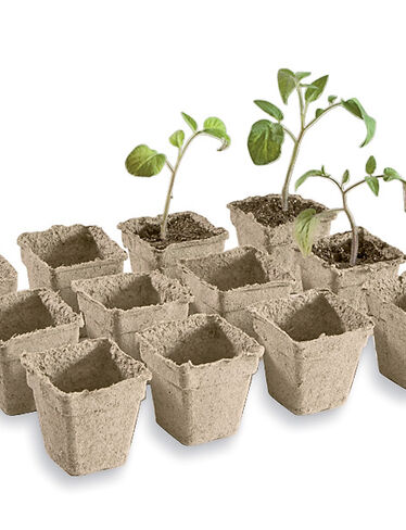 "3"" Cowpots, Set of 12"