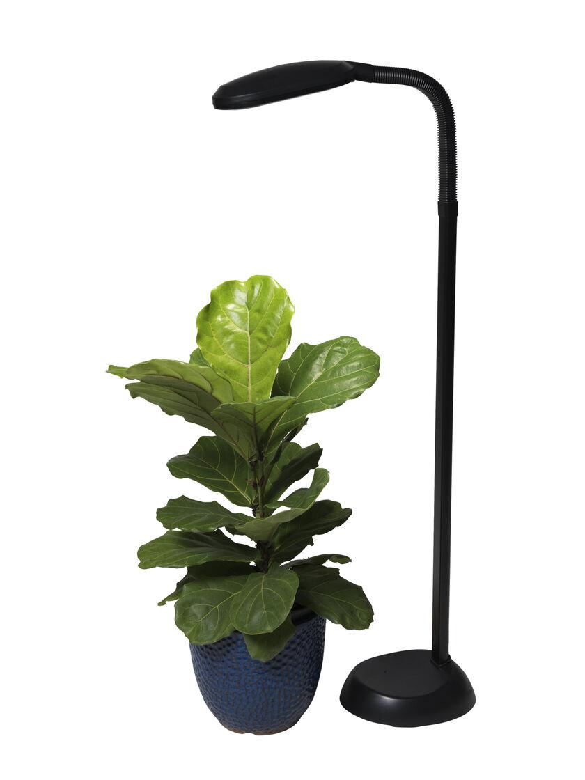 cfl grow light full spectrum floor plant lamp. Black Bedroom Furniture Sets. Home Design Ideas
