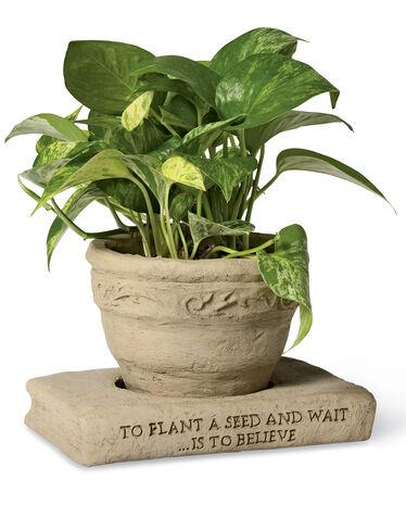 Flower Pot with Book Saucer