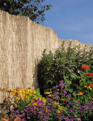 Tall Reed Fence