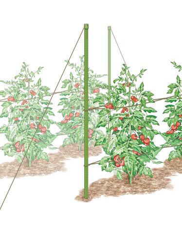 Florida Weave Tomato Trellis Kit