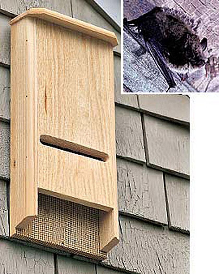Bat house bat box bat chelor pad for Bat condo