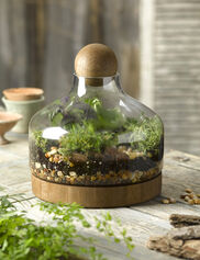 Glass & Wood Terrarium, Large